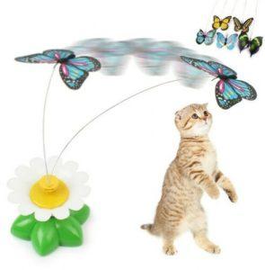 farfalla gioco gatto