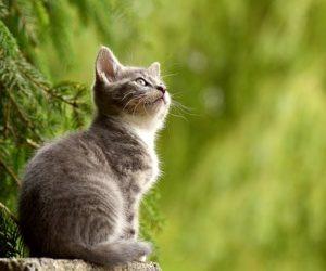 gatti animali da compagnia