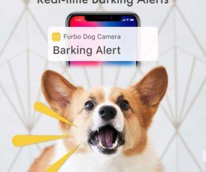 videocamera dog