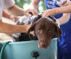 lavare cane pulizia